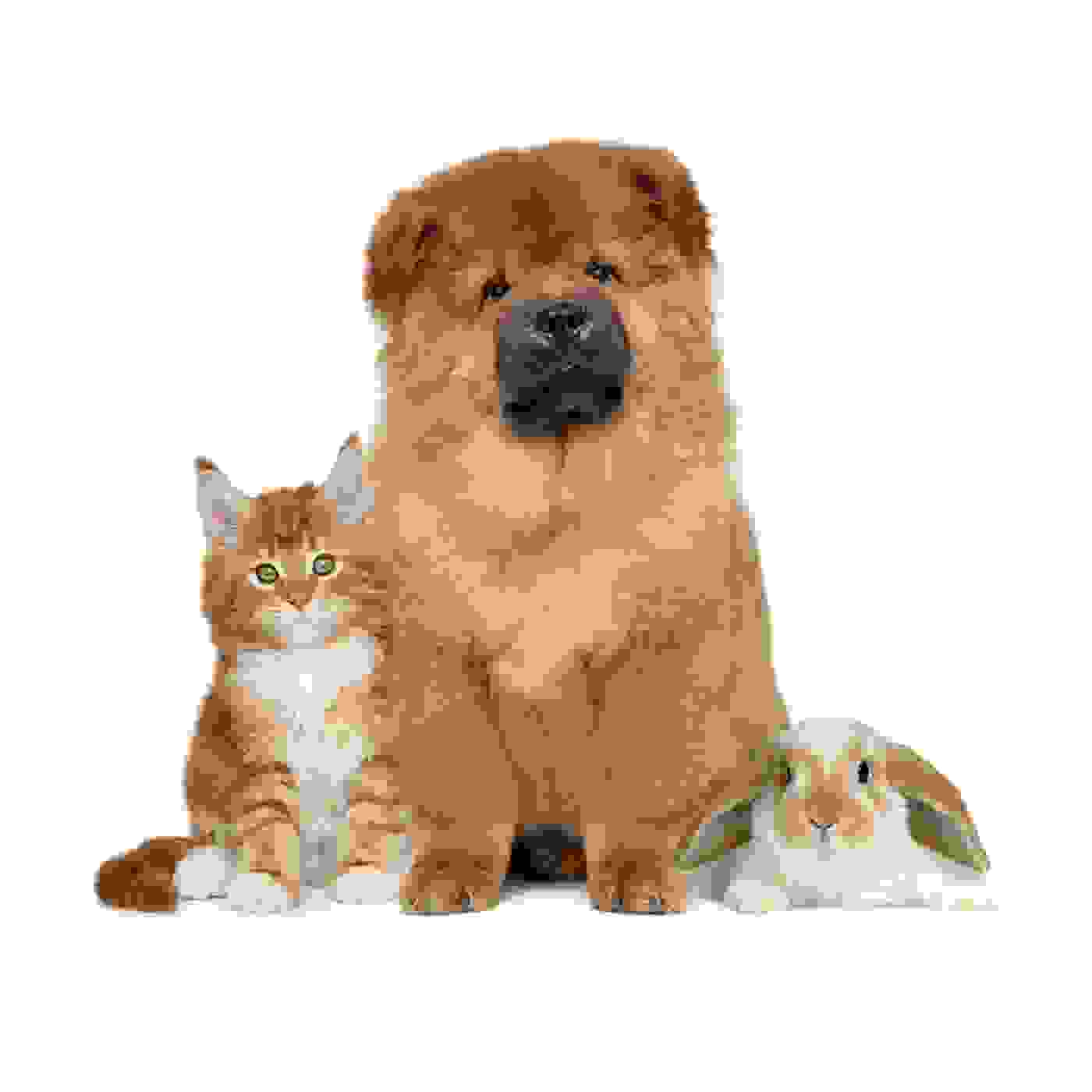 card-veterinario-em-casa