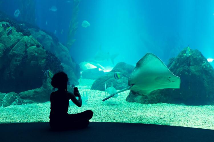 oceanario-de-lisboa-considerado-o-melhor-do-mundo