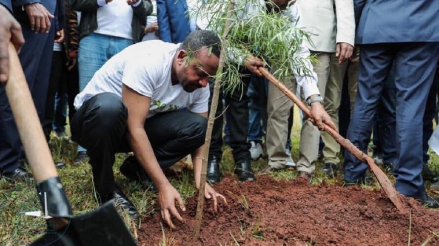 em-apenas-12-horas-plantou-se-350-milhoes-de-arvores-na-etiopia