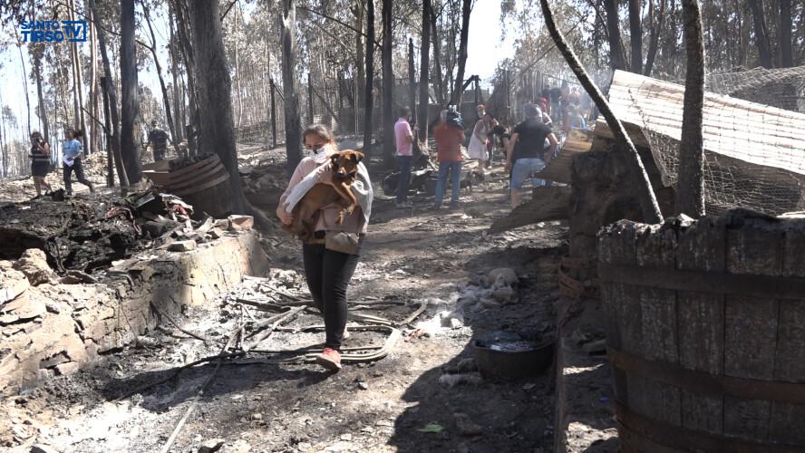 detido-homem-que-ateou-incendio-que-matou-73-caes-em-canil