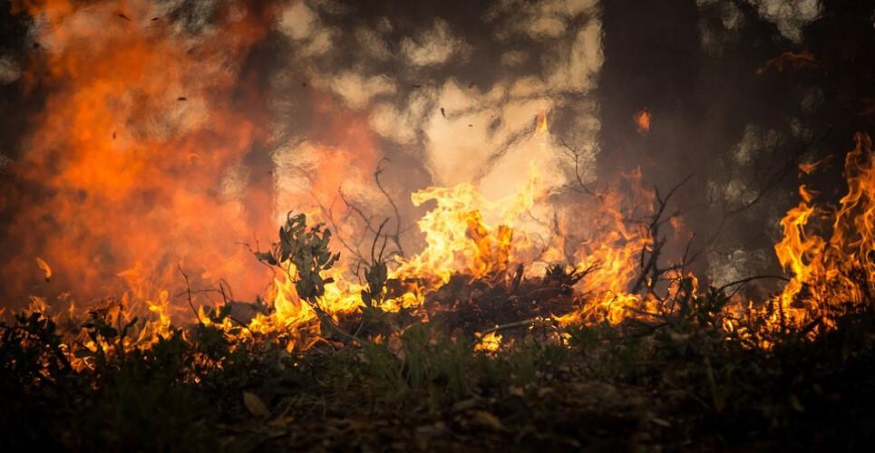 primeiros-oito-meses-de-2019-com-menos-43-de-incendios-rurais