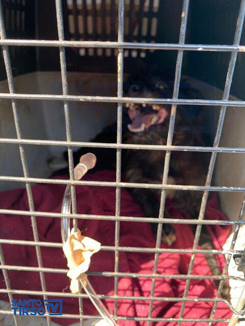 Associação Busca e Salvalmento Abrigo animal
