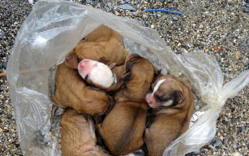 gnr-resgata-cinco-cachorros-de-contentor-do-lixo
