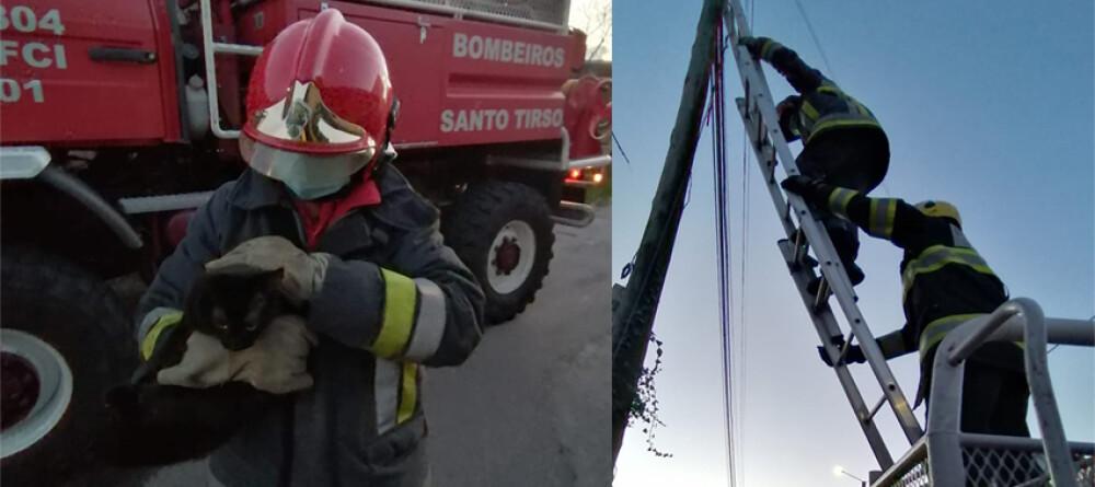 bombeiros-vermelhos-resgatam-gato-de-poste-de-telecomunicacoes
