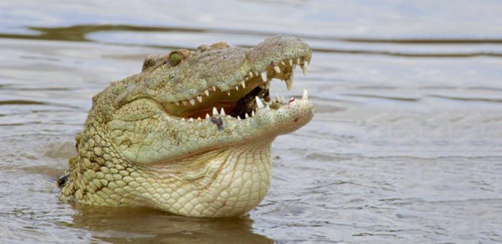 crocodilo-no-rio-douro