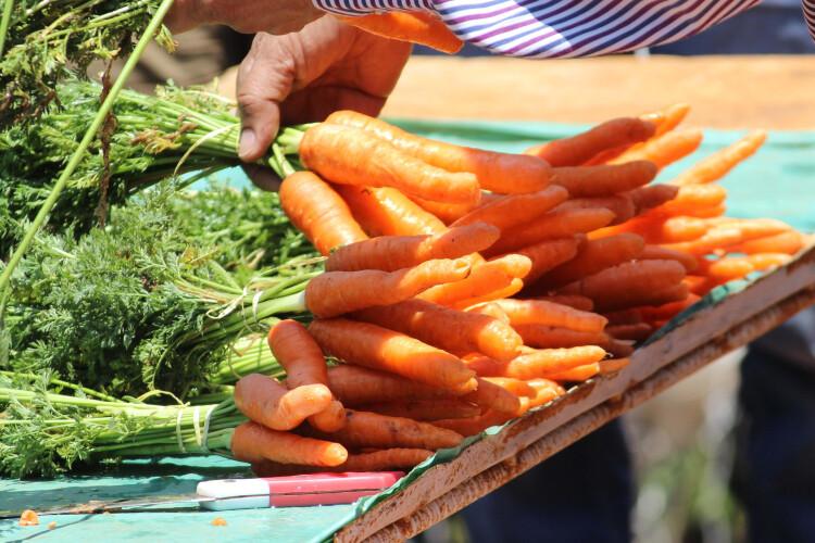 fique-a-saber-mais-sobre-a-cenoura