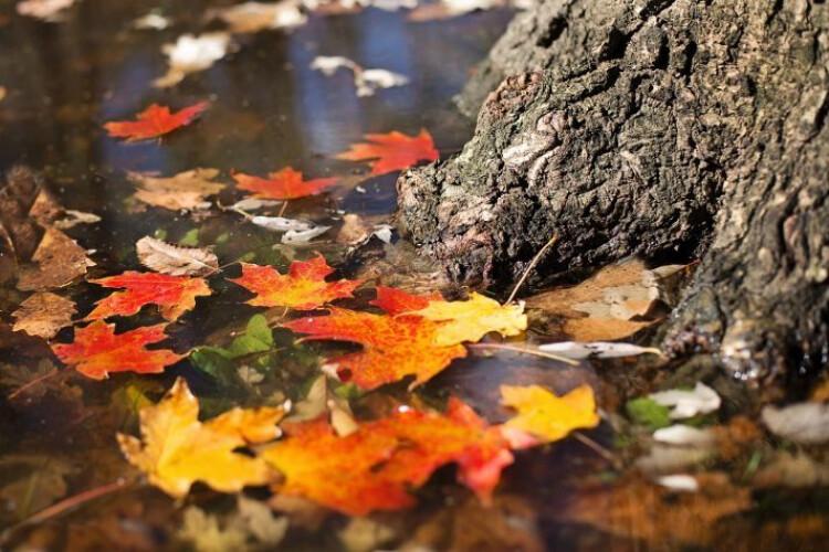 adeus-verao-ola-outono