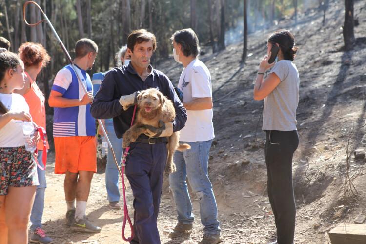 diretor-geral-da-dgav-demite-se-apos-incendio-em-canis-de-santo-tirso