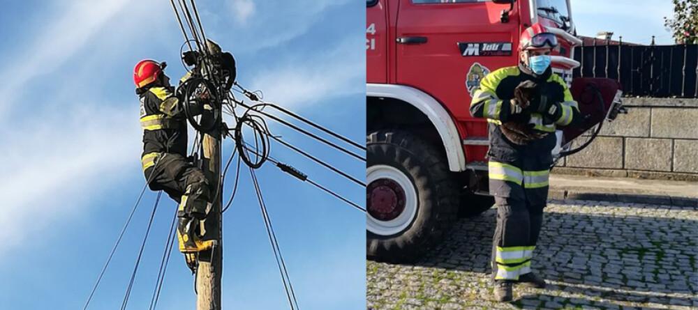 gato-e-salvo-pelos-bombeiros-voluntarios-de-santo-tirso