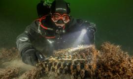 mergulhadores-encontram-maquina-nazi-enigma-da-segunda-guerra-mundial