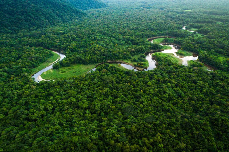 amazonia-desaparece-a-um-ritmo-de-2000-campos-de-futebol-por-dia