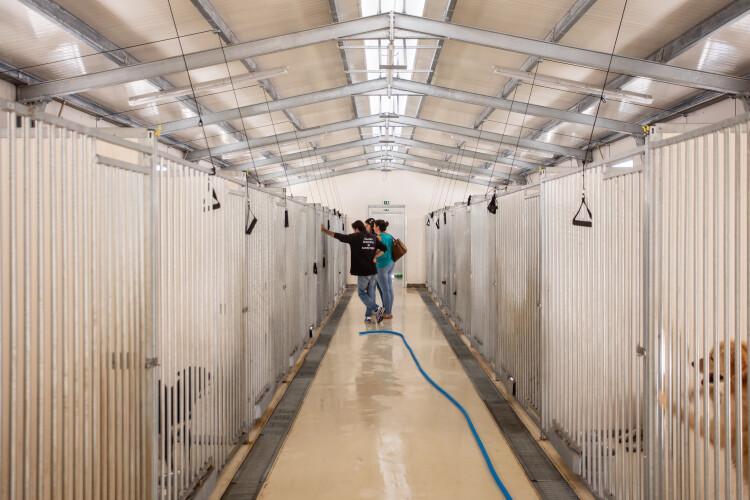canil-municipal-reabre-com-boxes-para-animais-de-doentes-covid-19