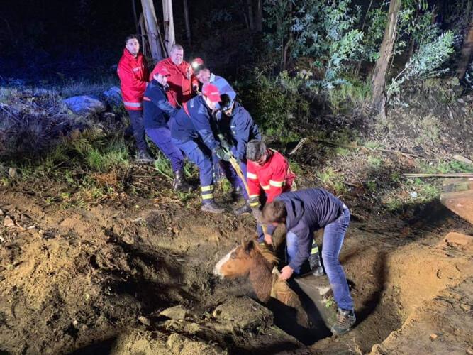 bombeiros-resgatam-cavalo-preso-em-aguas-fluviais