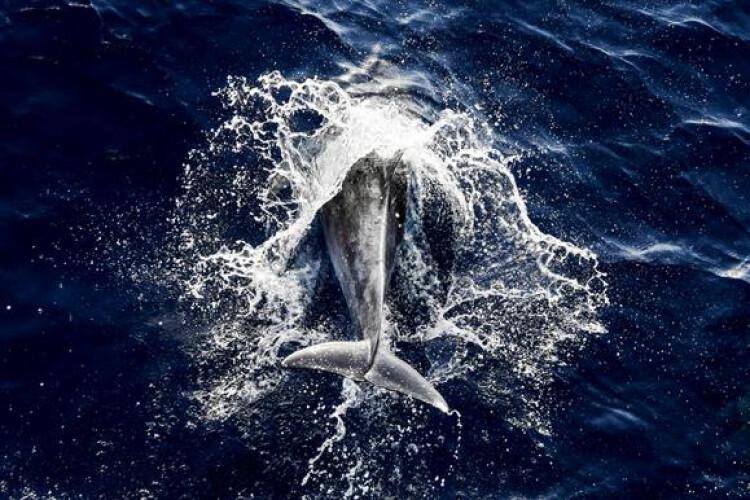 virus-esta-a-matar-golfinhos-desde-novembro