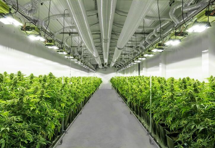cbd-ou-a-cannabis-que-pode-muito-bem-ser-terapeutica