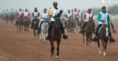 Retirada sanção de 20 anos por abuso de cavalo