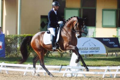 Cavalos Português de Desporto no Mundial de Cavalos Novos