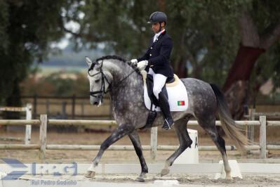 Os novos campeões de Critérios de Cavalos Novos