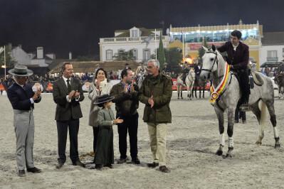 Cavalos luso-árabes homenageados na Golegã