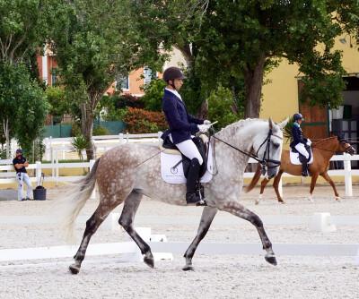 Cavalos do Monte Velho conquistam provas para cavalos novos na Beloura