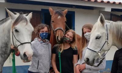 Tome as rédeas da sua protecção com as Al Equine Masks
