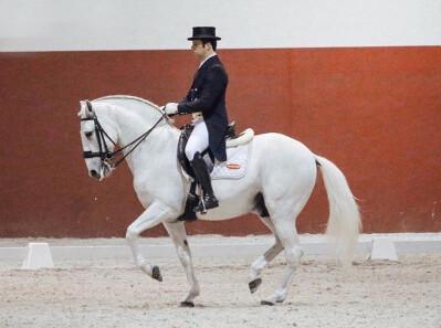 «O cavalo Lusitano não deve ficar para trás»