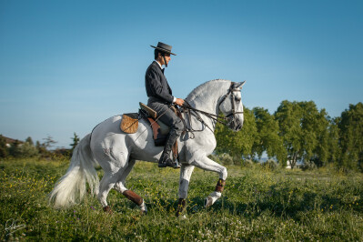 «Devemos criar cavalos com três andamentos naturais e muita força»