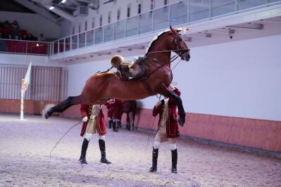 Escola Portuguesa de Arte Equestre retoma Galas