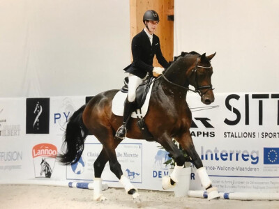 Cavalos portugueses na final do Campeonato Belga de Cavalos Novos
