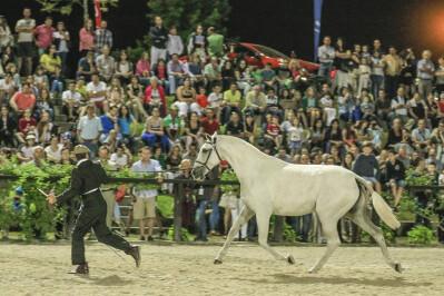Cancelada Feira do Cavalo de Ponte de Lima