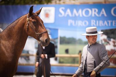 Lusitano Summit mostrou o cavalo Lusitano ao mundo