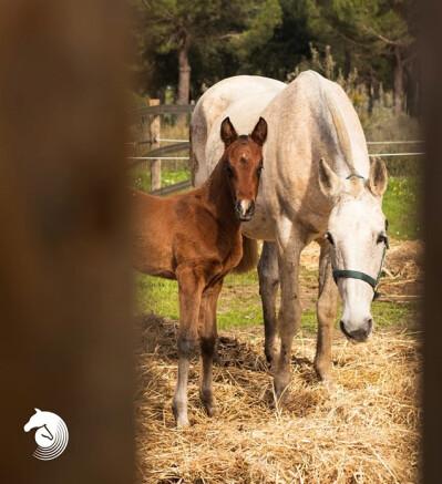 O cavalo e a égua: cada época mais distantes