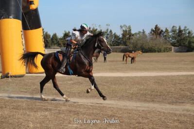 Cavaleiras portuguesas sobem no ranking mundial