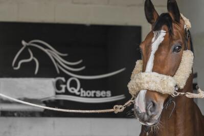 GQ Horses