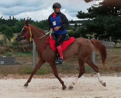 Égua PS Árabe Portuguesa em 5.º em França