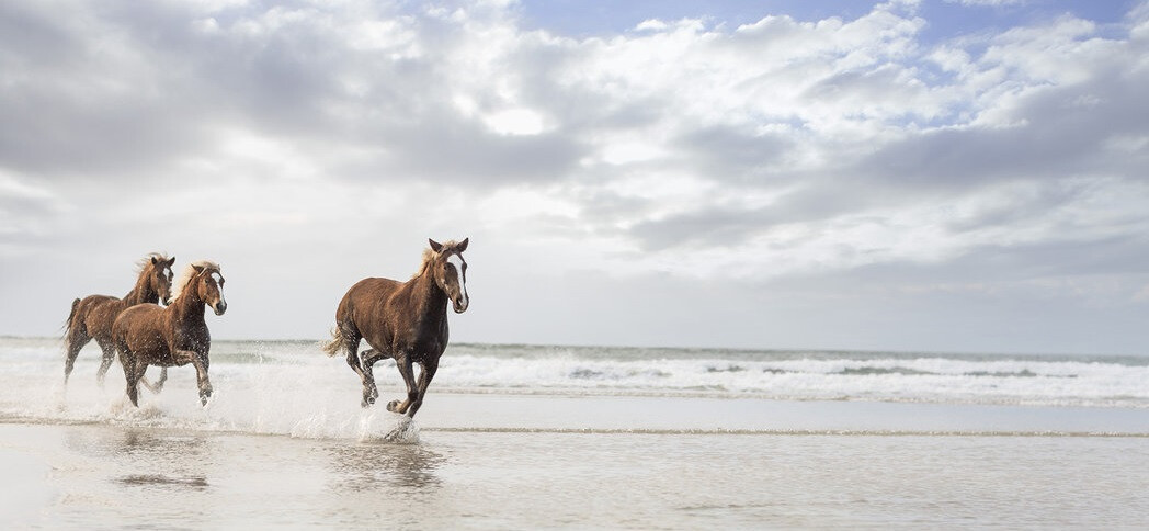 cavalos praia ferias