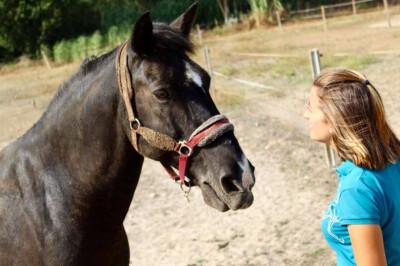 Respeito e compromisso para educar um cavalo
