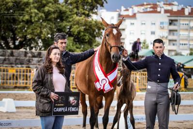 Campeões em Castelo Branco