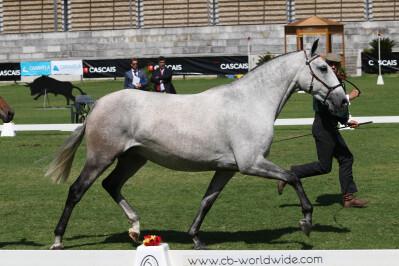 Revista Equitação: a sua companhia neste Verão!