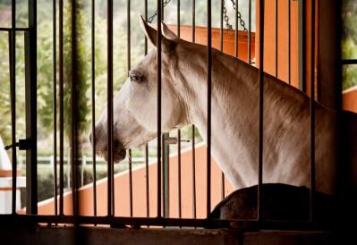 O #FicaemCasa dos cavalos