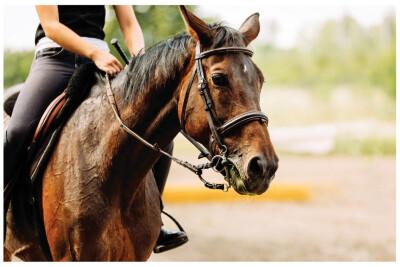 Como vender um cavalo?