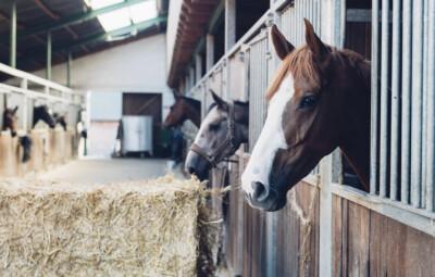 Centro de importação de cavalos de Miami fechado