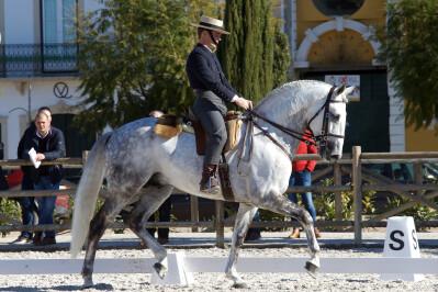 Ibérico II: garanhão aprovado com nota mais alta do dia