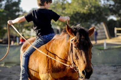Como falar com o cavalo