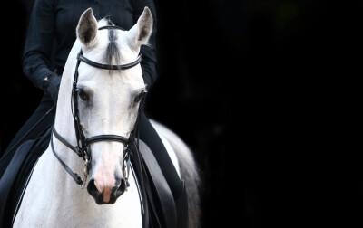 Projecto de Cavalos Jovens Lusitanos de Ensino 2019
