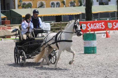 Atrelagem nos Jogos Equestres Regionais dos Açores