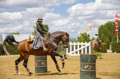 Campeonato da Europa de Equitação de Trabalho adiado para 2021