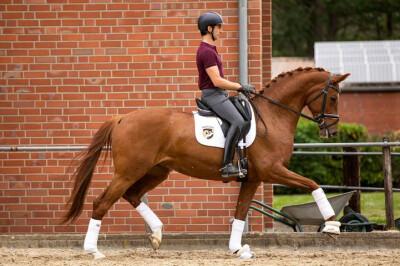 Mais um português no Mundial de Cavalos Novos