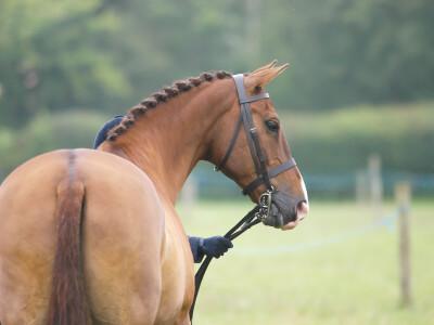 Como alimentar cavalos com úlceras?