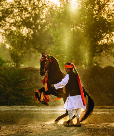 Marwari, The Horse of India